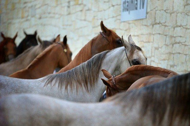 utrzymanie konia